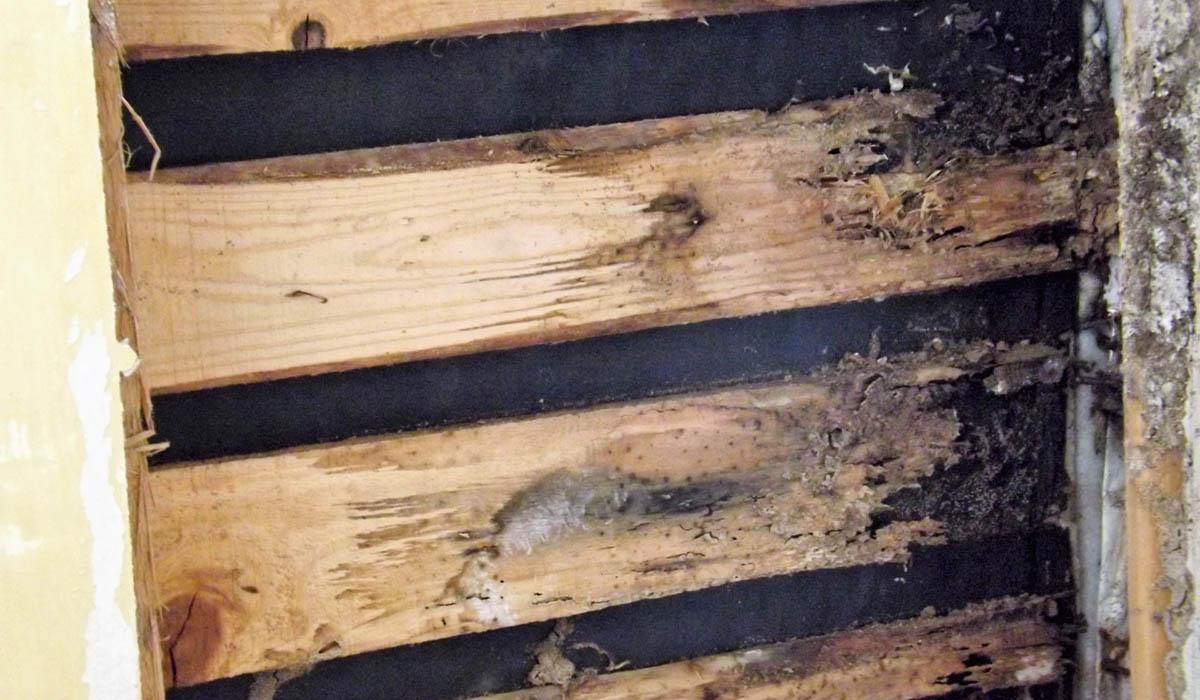 雨漏りの影響によるシロアリの繁殖